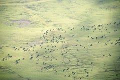 Tibetan mountain pasture royalty free stock photo