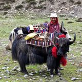 Tibetan nomad. TSAKANG, NEPAL - SEPTEMBER 04: Tibetan nomad with yaks from the village of Tibetan refugees on September 04, 2011 in Tsakang, Dolpo district Stock Photo