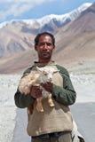 Tibetan nomad with goatling, India Royalty Free Stock Photos
