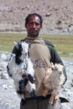 Tibetan nomad with goatling, India Stock Photos