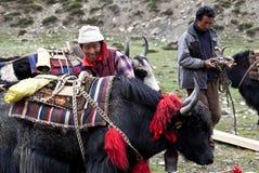 Tibetan nomads. TSAKANG, NEPAL - SEPTEMBER 04: Tibetan drover with yak from the village of Tibetan refugees on September 04, 2011 in Tsakang, Dolpo district Stock Images