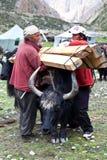 Tibetan nomads Royalty Free Stock Image