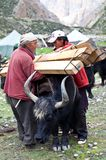 Tibetan nomads Stock Photography