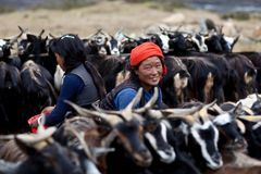 Tibetan nomads with goats. DHO TARAP, NEPAL - SEPTEMBER 08: An unidentified Tibetan nomads with goats during the local Dho Tarap Full Moon Festival on September Stock Photo