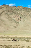 Tibetan nomads travelling with their horses. Ladakh`s highlands,. India Royalty Free Stock Photography