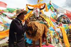 The Tibetan people. A life on the Tibetan plateau Tibetan uncle, daily rely on visitors to take picture with his pet to make money, the Tibetan mastiff is the Stock Image