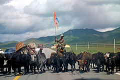 Tibetan people wiht yak. On the road in Qinghai,China Stock Images