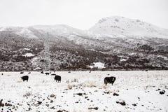 Free Tibetan Plateau And Herd Of Yaks, China Stock Photo - 41397330