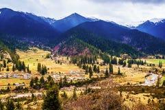 Tibetan plateau scene-Lu Lang Zhen(Lulang town) Stock Photography