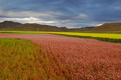 The Tibetan plateau to the crops.  Stock Photo
