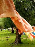 Tibetan prayer flags. Tibetan prayers hung from trees in countryside Stock Photography