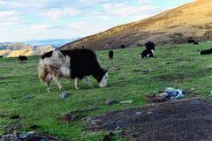 Tibetan Ranch Royalty Free Stock Images