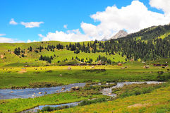 Tibetan Ranch Stock Images
