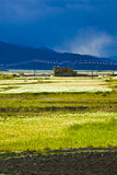 Tibetan rural landscape. Colorful green fields in rural Tibetan landscape, mountains in background Stock Image