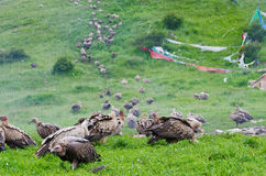 Tibetan sky burial Stock Images