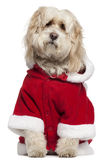 Tibetan Terrier wearing Santa outfit Royalty Free Stock Photos