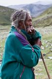 Tibetan veehoeder Stock Foto's