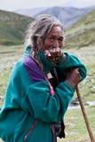 Tibetan veehoeder Royalty-vrije Stock Foto
