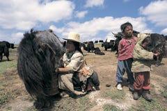 Tibetan veehoeder Stock Fotografie