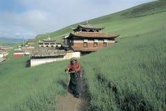 Tibetan veehoeder Royalty-vrije Stock Fotografie