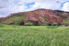 Tibetan village and field Stock Image