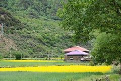 Tibetan village. The landscape of Tibetan folk house and cropland Stock Image