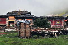 Tibetan village. In the morning ,There are many around yak Stock Photo
