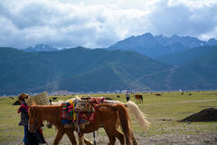 Tibetan woman drag horses with snow mountain background Stock Photos