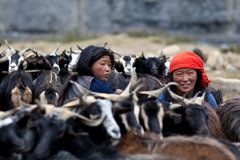 Tibetan women with herd of goats. DHO TARAP, NEPAL - SEPTEMBER 08: Tibetan women during herd of goats on September 08, 2011 in Dho Tarap Village, Dolpo district Stock Image