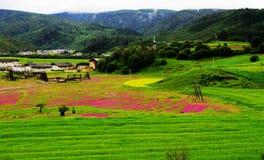 Tibetaner, Dorf, Hirten, Landschaft Lizenzfreies Stockfoto