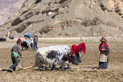 Tibetanische Landwirte Lizenzfreie Stockfotos