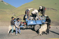 Tibetanischer Hirt Lizenzfreies Stockfoto