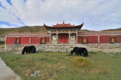 Tibetanischer Tempel Stockfoto