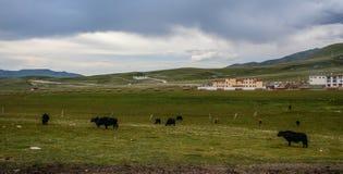 Tibetant berglandskap av Garze royaltyfria bilder