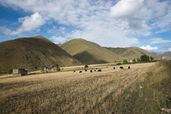 Tibeten rural scenery Royalty Free Stock Image