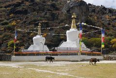 Tibetian stupas and cows. Tibetian buddhist stupas and cows Royalty Free Stock Photo