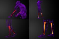 Tibia bone. 3d rendering medical illustration of the tibia bone Stock Photography