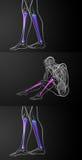Tibia bone. 3d rendering medical illustration of the tibia bone Stock Photo