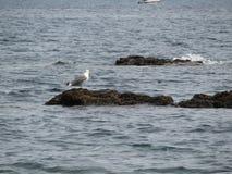 Tibuda海岛和波浪和岩石 免版税图库摄影