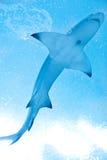 Tiburón Foto de archivo