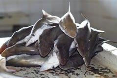 Tiburón Foto de archivo libre de regalías
