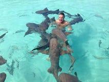 Tiburón amistoso Fotografía de archivo libre de regalías