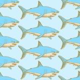 Tiburón asustadizo del bosquejo en estilo del vintage Imagen de archivo libre de regalías