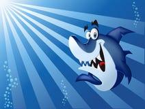 Tiburón azul Fotos de archivo libres de regalías
