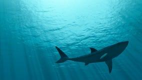Tiburón blanco Foto de archivo