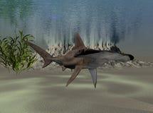 Tiburón de Hammerhead Fotografía de archivo libre de regalías