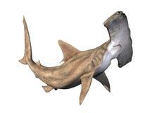 Tiburón de Hammerhead Foto de archivo libre de regalías