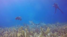 Tiburón del Caribe del filón en Jardin de la Reina, Cuba almacen de metraje de vídeo