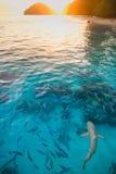Tiburón en agua pura en la puesta del sol Foto de archivo