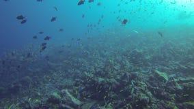 Tiburón gris y pescados subacuáticos almacen de metraje de vídeo